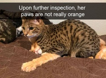 tabby smushes orange cat
