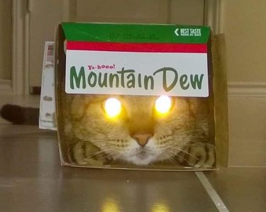 cat with laser eyes in mountain dew box
