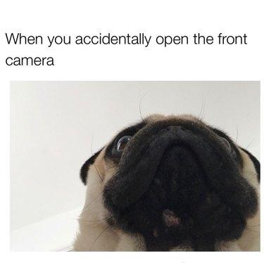 Photo of pug's jowly chin.