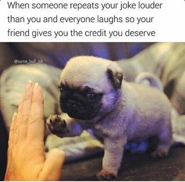 Pug puppy giving human a high five
