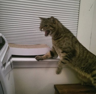 cat hisses at air conditioner