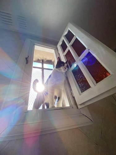 cat stands in front of streaming sunlight