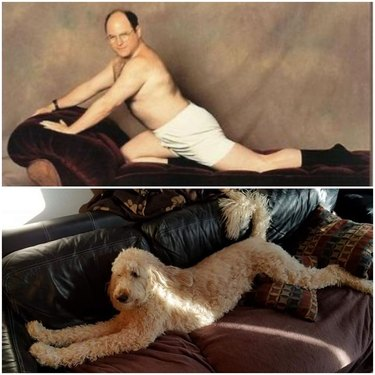 dog looks like Costanza from Seinfeld