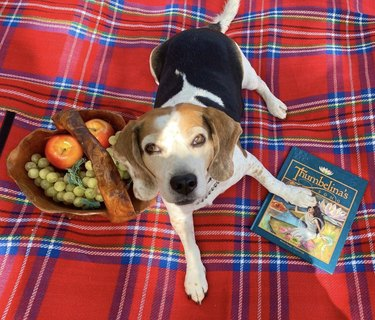 dog with thumbelina book on picnic blanket