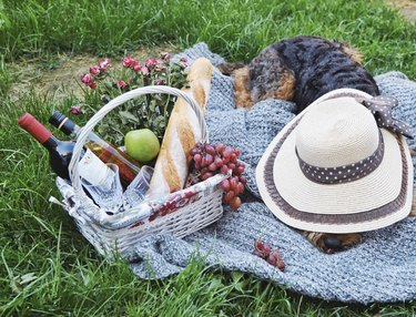 dog next to picnic basket with a hat on its head