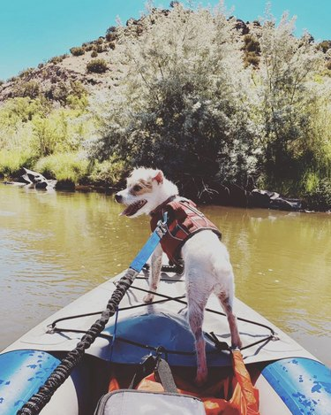 dog standing at helm of kayak