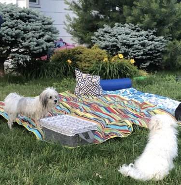 two dogs by a picnic blanket