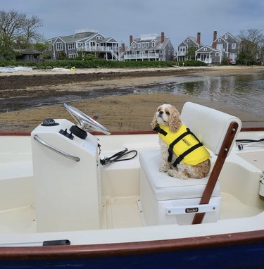 dog sitting in captain's seat