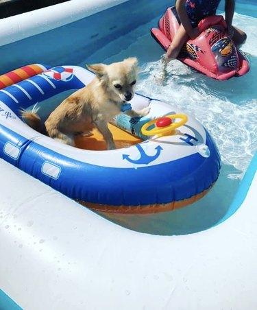 dog inside inflatable little boat