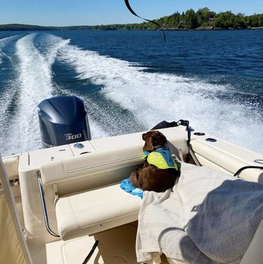 dog snuggled up inside a motorboat