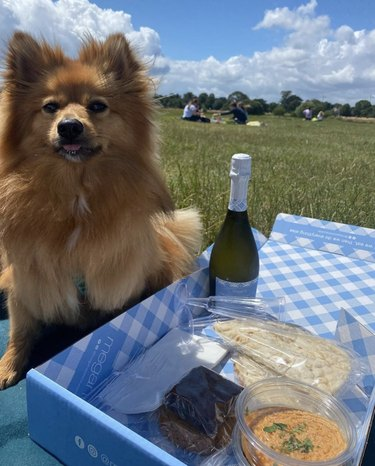 dog sitting by picnic basket with prosecco