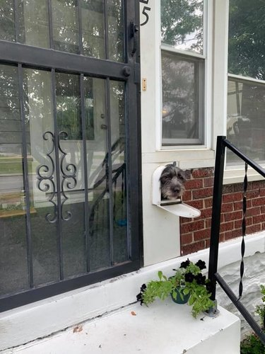 dog sticks head out mailbox