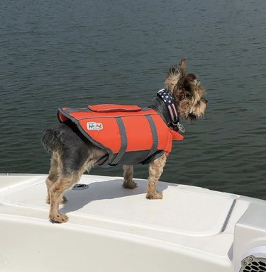 dog in life vest on boat