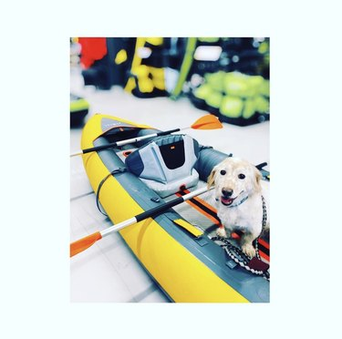 dog inside a kayak