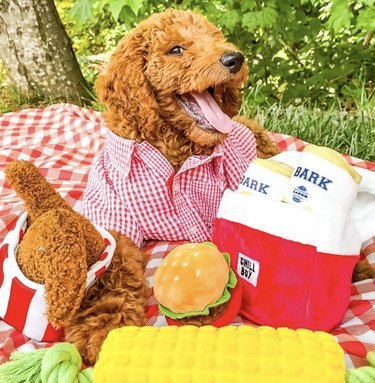 dog on checkered picnic blanket