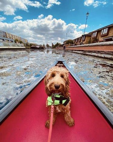 dog inside red canoe