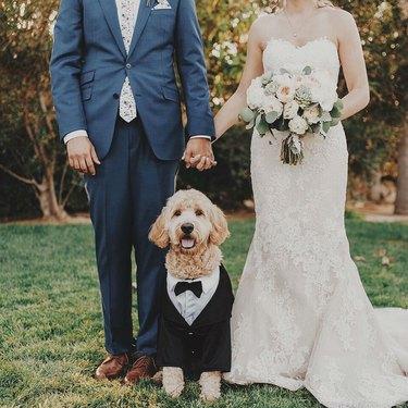 goldendoodle dog in tuxedo at wedding