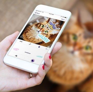 Scritch in-app camera shown on a phone