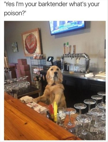 Dog being a barktender
