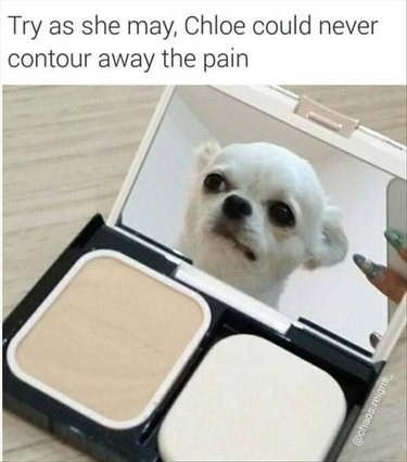 Dog looking in makeup compact's mirror
