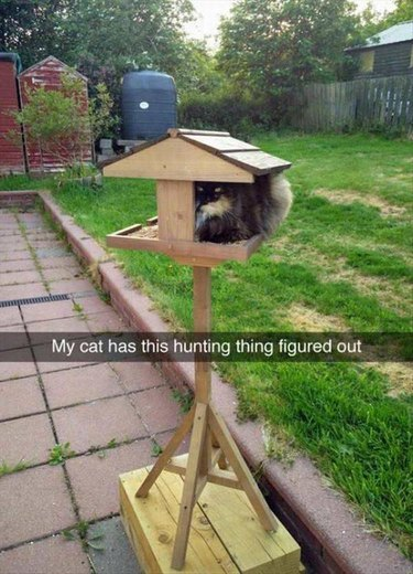 Smart  cat sitting and waiting for birds in a bird feeder