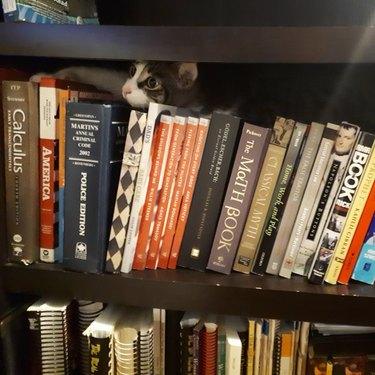 cat peers over books