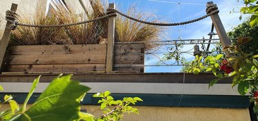 cat hides in planter
