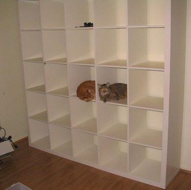 cats bookshelf