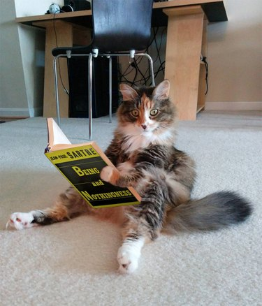 Cat look alarmed while reading philosophy book.