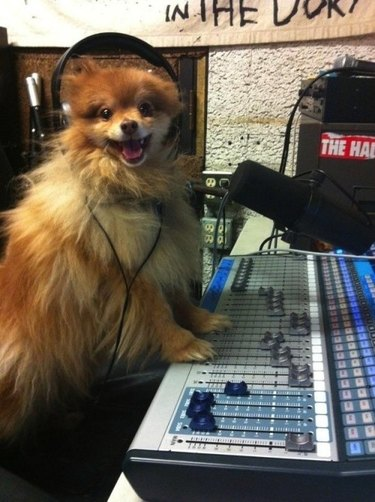 Dog wearing headphones next to sound mixer.