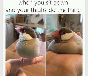 A bird that plopped