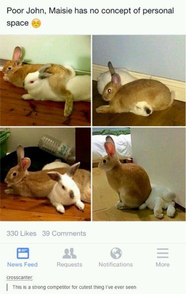 A bunny with no concept of personal space