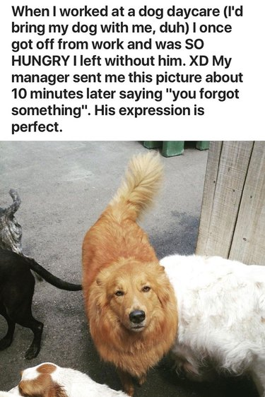 Dog not very happy about being forgot
