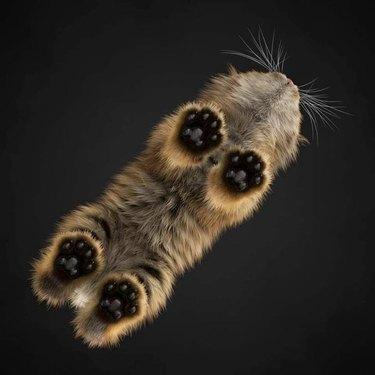 Underside of cat