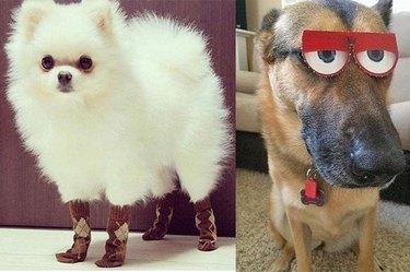 dog in socks next to dog wearing glasses