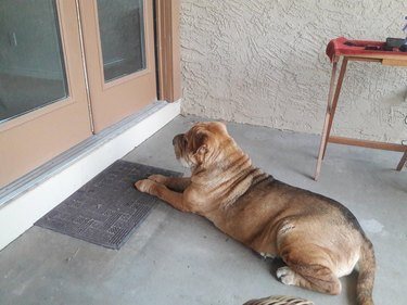 Dog waiting outside a door.