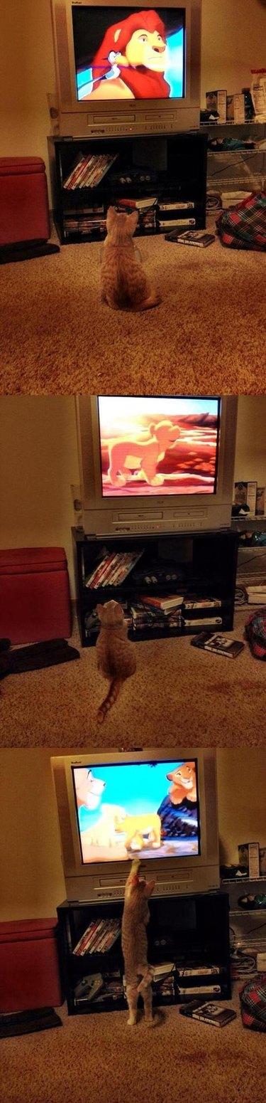 Kitten watching The Lion King