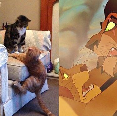 Cats wresting