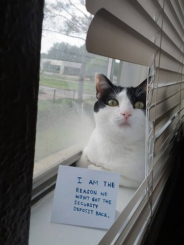 """Cat with sign that says """"I am the reason we won't get the security deposit back."""""""