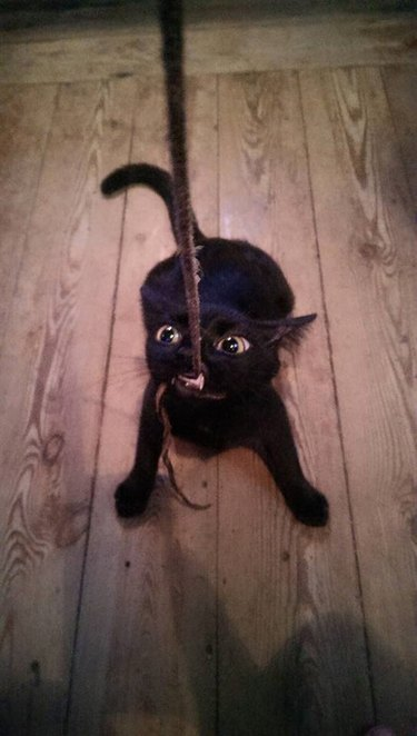 Cat with a crazy look, pulling at a string.