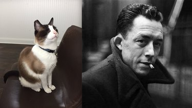 cat named after Albert Camus