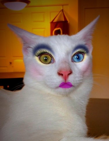 Makeup app on a picture of a cat