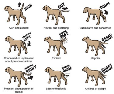 Dog tail wags meanings