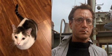 cat named after Chief Brody from Jaws