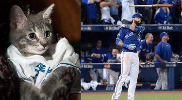 kitten named after Jose Bautista