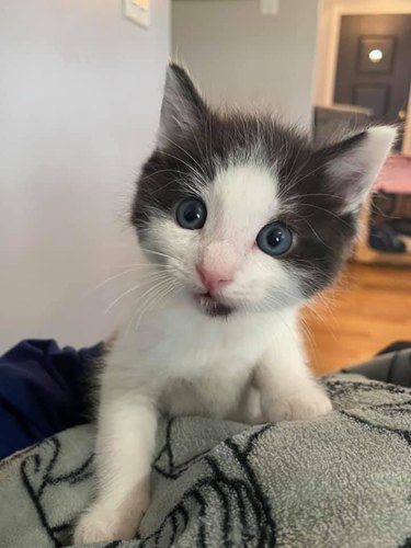 foster kitten adopted