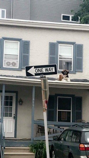 Dog sitting on roof.