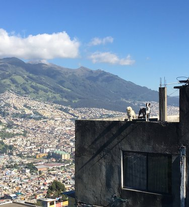 Two dogs on roof looking at beautiful view.