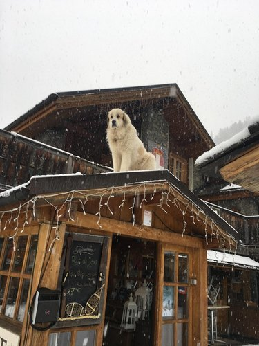 Dog sitting on roof in snow.