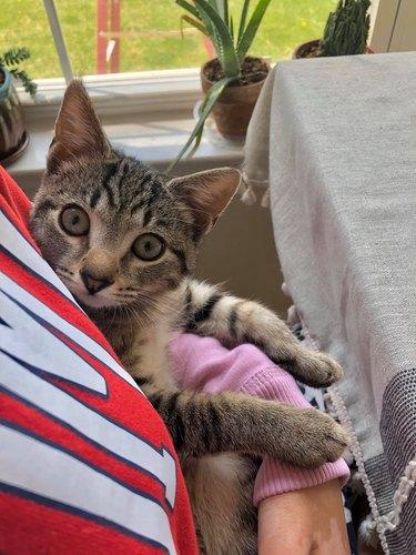 person cradles cat